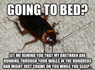 cockroach-meme
